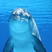 WooCommerce Dashing Dolphin